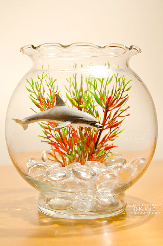 dolphin-fishbowl-kmcnickle-toy