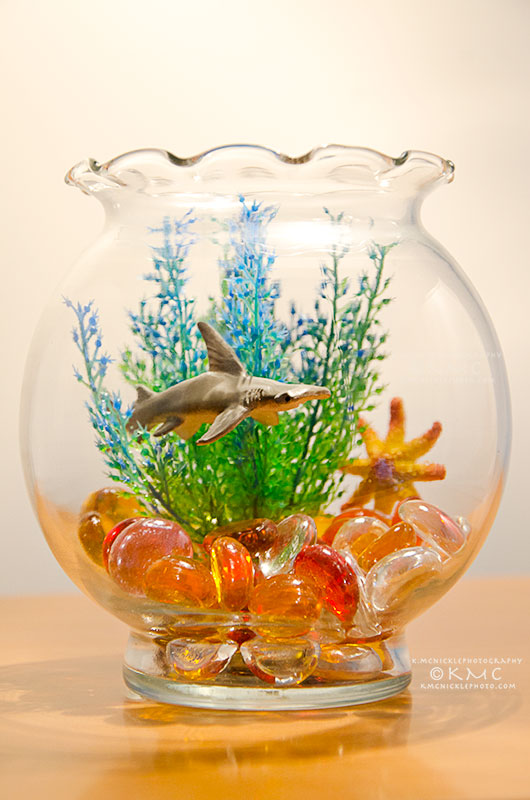 shark-toy-kmcnickle-fineart-fishbowl